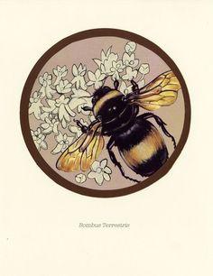 bumble bee by ~Cephalopodwaltz on deviantART