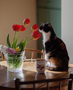 Good Morning! #allthebeautifulthings #morning #goodmorning #cat #cats #catlove #coffee #coffeetime #spring #may #springflowers #flowers #tulips #gėlės #tulpės #katė