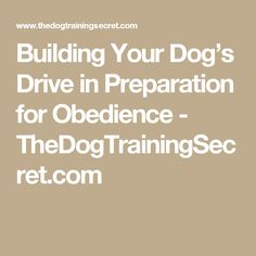 Building Your Dog's Drive in Preparation for Obedience - TheDogTrainingSecret.com