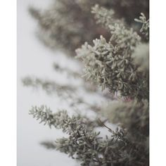 January 8x10 Fine Art Photograph, New York City, Snow, Nature, Winter ($14) ❤ liked on Polyvore featuring home, home decor, wall art, photography wall art, paper wall art, unframed wall art, nyc wall art and new york city home decor