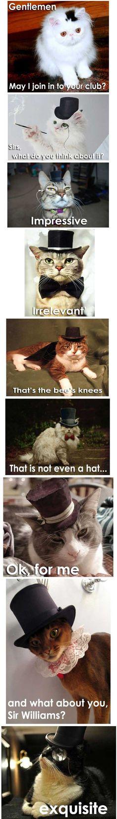 Sir Cats!