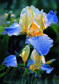 Watercolor Painting Art of Russell Cobane purple iris