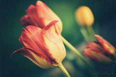 Flower My Photos, Flowers, Plants, Plant, Royal Icing Flowers, Flower, Florals, Floral, Planets
