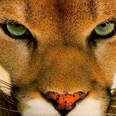 I love her fierce eyes...