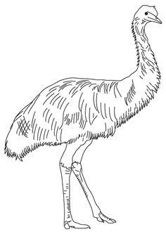 Kookaburra Printable And Coloring Page Coloring Pages
