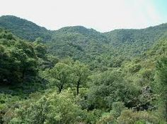 El bosque mediterráneo continental. Es la máxima expresión en cuanto a biodiversidad de los ecosistemas terrestres de Extremadura.