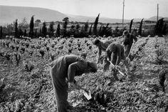 Henri Cartier-Bresson 1960 Pyrenees-Orientales. Corbieres
