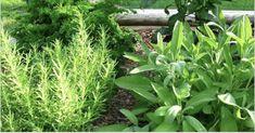 Médicos confirman que los cartílagos de la cadera y rodillas se regeneran en una semana usando esta mezcla de hierbas
