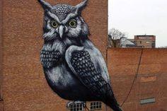 RUA's owl sister
