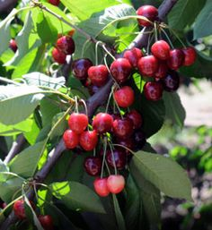 Cherries Orchards, Wheat Fields, & Farms in The Dalles, OR on ...