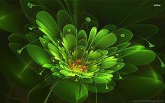 Digital High Defination D HD Flower Wallpapers p