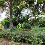 Guía básica de plantas cobertoras