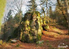 Wanderung mit Unbekanntem: die Traumschleife Wildnis-Trail