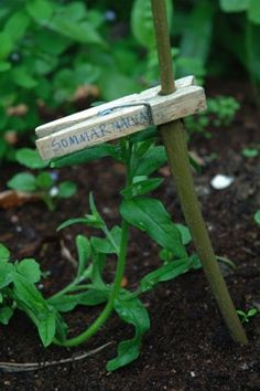 Plant markers---duh---how simple is that!  Love it!