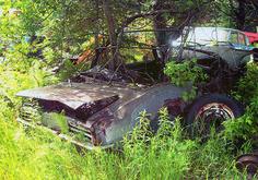 1968 Pontiac Firebird convertible with tree growing through top bows. Siegel Recycling, Tomahawk, Wisconsin.