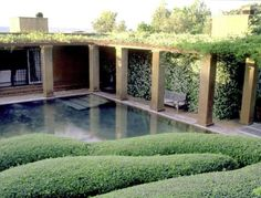 fernando caruncho - Fernando Caruncho (born 1958, Madrid, Spain) is a landscape architect best known for his minimalist, contemporary gardens. His work focuses on the Charbagh style of the Islamic gardens of Moorish Andalusia
