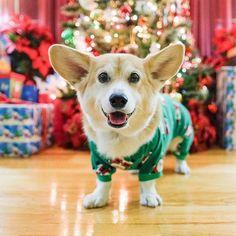 have yourself a merry little corgmas - Christmas Corgi