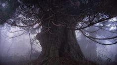 Amanotakashi.jp #amanotakashi #photography #japan #tree