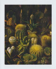 #plants #beauty #cactus