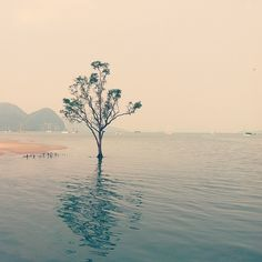 Langkawi, Malaysia.. One of the most beautiful islands I've been on-  @josevilla