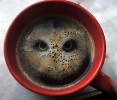 A guy dropped a pair of Hula Hoops (potato snacks) into coffee and saw a bird of prey staring back at him. Pareidolia rules.