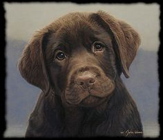 Chocolate lab. Gosh this reminds me of my Cocoa baby