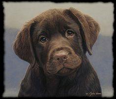 www.dogsandpuppies.co.uk