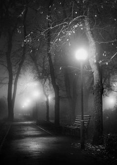 Nighttime in the Park
