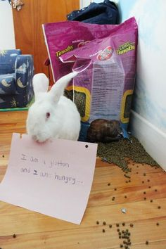 Bunny Shaming Site