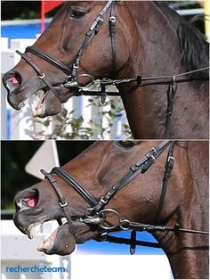 Show jumping 2015 - Springturnier 2015 Horse Bits, Horse Tack, All About Horses, Stop Animal Cruelty, Pet Peeves, Show Jumping, Animal Rights, Horse Riding, Dressage