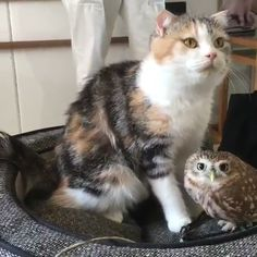 Cats and kittens are so funny and cute animals, they are simply the best! Just look how all these cats & kittens play, fail, get along with dogs, get their Cute Funny Animals, Cute Baby Animals, Animals And Pets, Cute Cats, Funny Cats, Pretty Cats, Adorable Kittens, Funny Cat Videos, Cute Owl