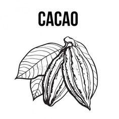 depositphotos_133964376-stock-illustration-hand-drawn-ripe-cacao-fruit.jpg (450×450)