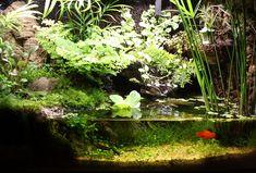 10gal Paludarium - Page 4 - Paludariums - Aquatic Plant Central