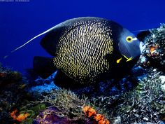 Cozumel Saltwater Fish