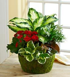 Our dazzling dish garden features a bright blooming kalanchoe, and is ideal for sending smiles that last. House Plants Decor, Plant Decor, Garden Yard Ideas, Garden Pots, Container Plants, Container Gardening, Succulents Garden, Planting Flowers, Floor Plants