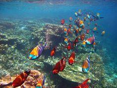 Beautiful fish in the Maldives