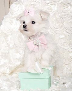 maltese princess