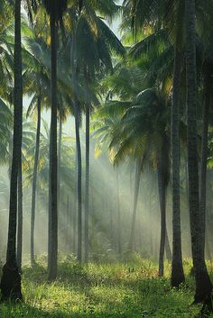 Lush Palm Trees, Koh Kood, Thailand |  kohkut, via Flickr