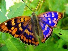 Mariposa, Amarillo, Azul, Hoja, Flor