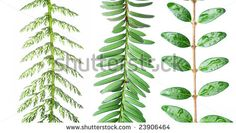 three different types of leaves against white background