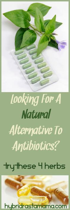 Are you looking for a natural alternative to antibiotics? Great news! There are four herbs that do the same, if not more, as antibiotics without the damaging effects.  From HybridRastaMama.com
