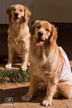 O que mais você pode fazer pela saúde do seu pet | Cachorro Verde