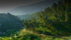 طبيعه خضار اخضر طريق حب الم فراق  وجع شجر راحه فلسطين مقعد قديم  natural