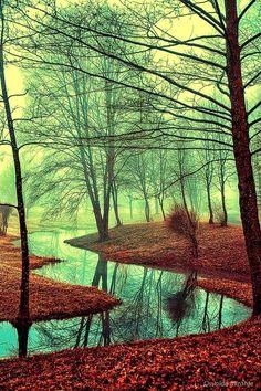 Into the wildy dream by Osvaldo