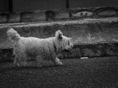 Street Photography: Arranjando bons motivos para quebrar as regras