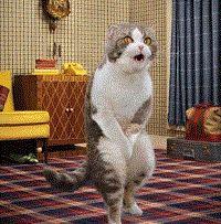 5 Solutions naturelles pour éliminer les odeurs d'urine de chat! - Trucs et Astuces - Des trucs et des astuces pour améliorer votre vie de tous les jours - Trucs et Bricolages - Fallait y penser !