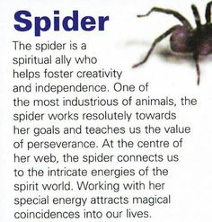 spider spirit... My mom told me how I was seeing many spiders that she did not see when I was 2