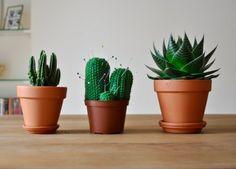 cactus-mazettes-1