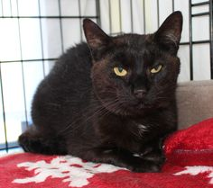 Meet Little Bear, she is 5 years old, very friendly and looking for a new home. If you might be able to give her a home, please contact Maureen on 07 578 8335 to meet Little Bear.