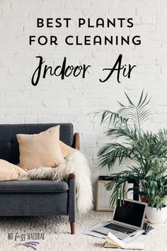 Indoor plants can be very effective at absorbing indoor chemicals in the air. Find out which ones work best!